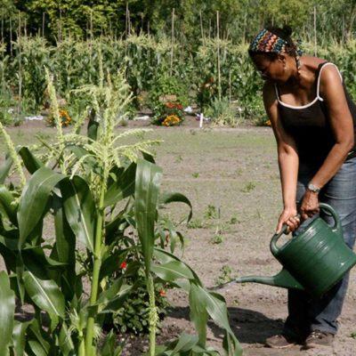 Bloei & Groei - water en liefde voor de tuinen
