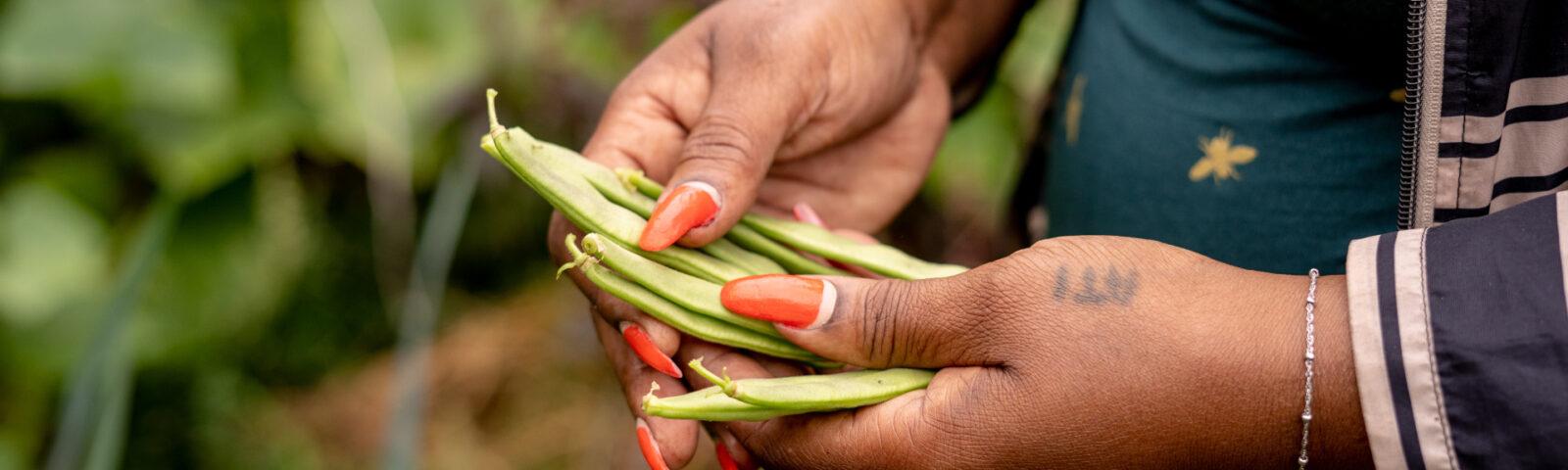 Boontjes oogsten - Vrouwen tuinieren persoonlijke groei