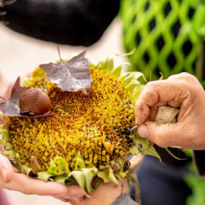 Zonnebloem - Samen bloeien bij Bloei & Groei